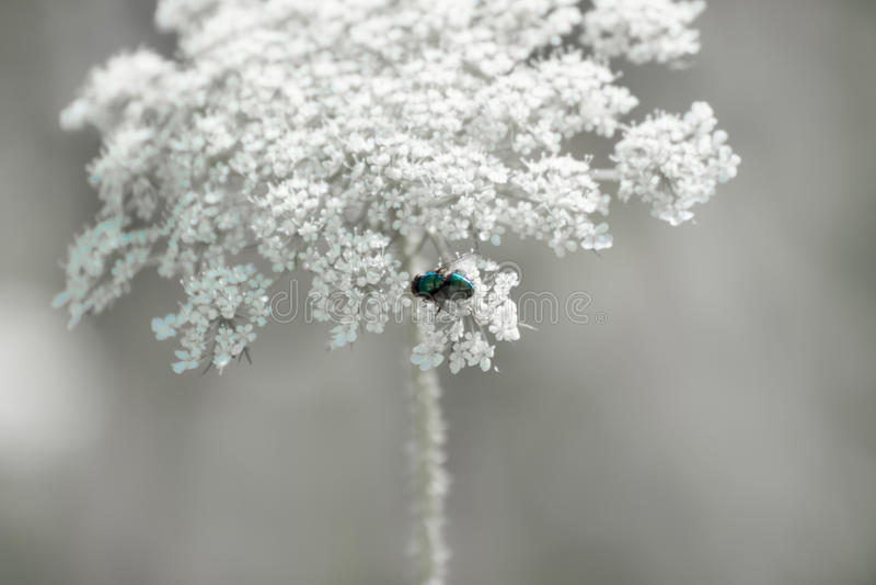 En fluga på blommakronblad royaltyfri bild
