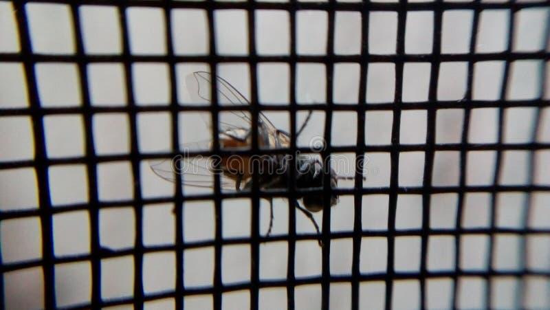 En fluga på fönstret arkivbild