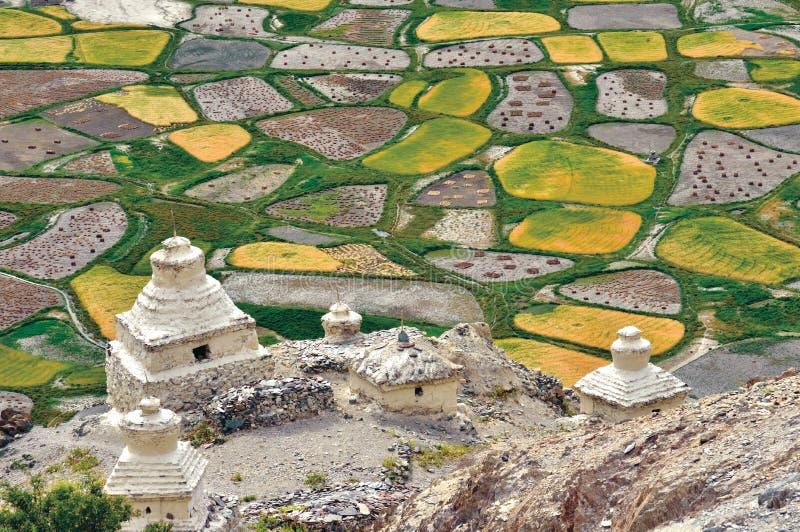 En flyg- sikt av fält under plockningtid, Zanskar dal, Ladakh, Jammu and Kashmir, Indien royaltyfria bilder
