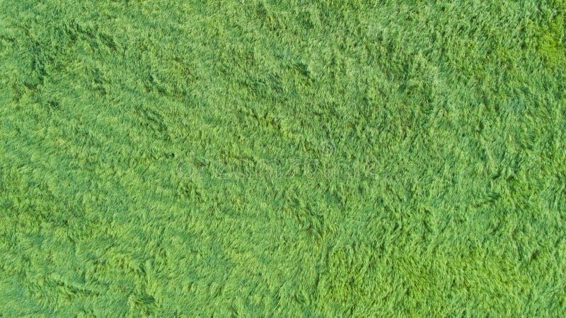 En flyg- sikt av en stor lapp av något nytt klippt, sunt grönt gräs royaltyfri foto