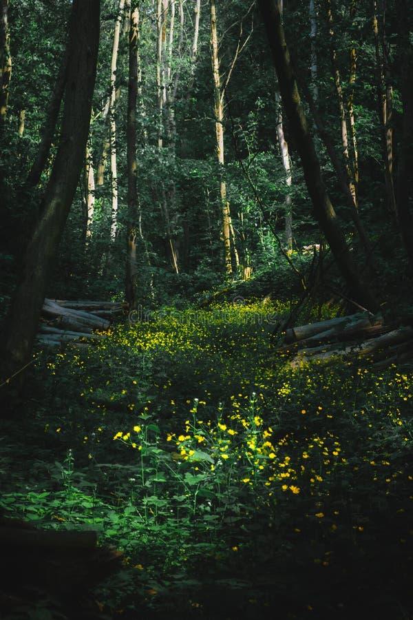 En frodig äng i mitt av skogen som är mogen med gula blommande blommor arkivbild