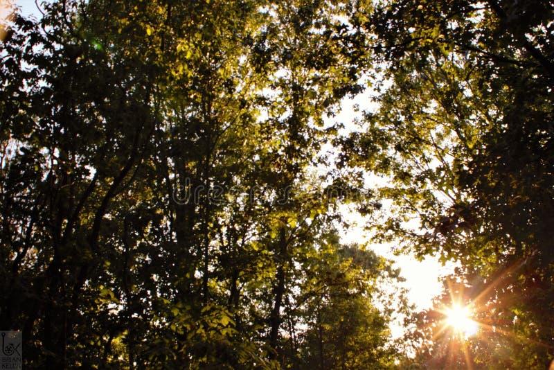 En gå bland träden royaltyfri foto