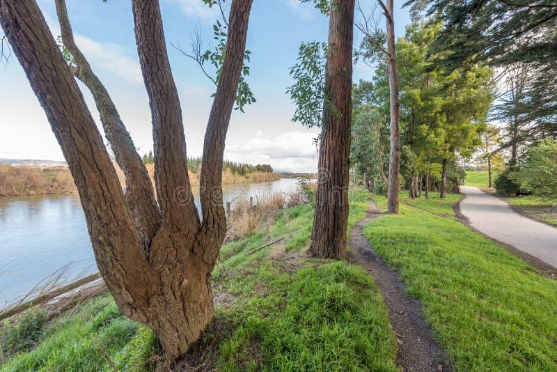 En gångbana till och med en parkera i Palmerston norr Nya Zeeland arkivfoto