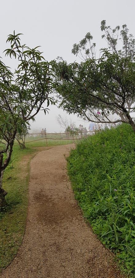 En gåväg in i trädgården royaltyfria bilder
