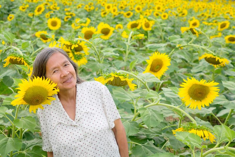 En gammal asiatisk kvinna i fältet av den blommande solrosen i Bangkok royaltyfria bilder