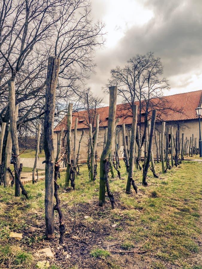 En gammal vingård royaltyfria bilder