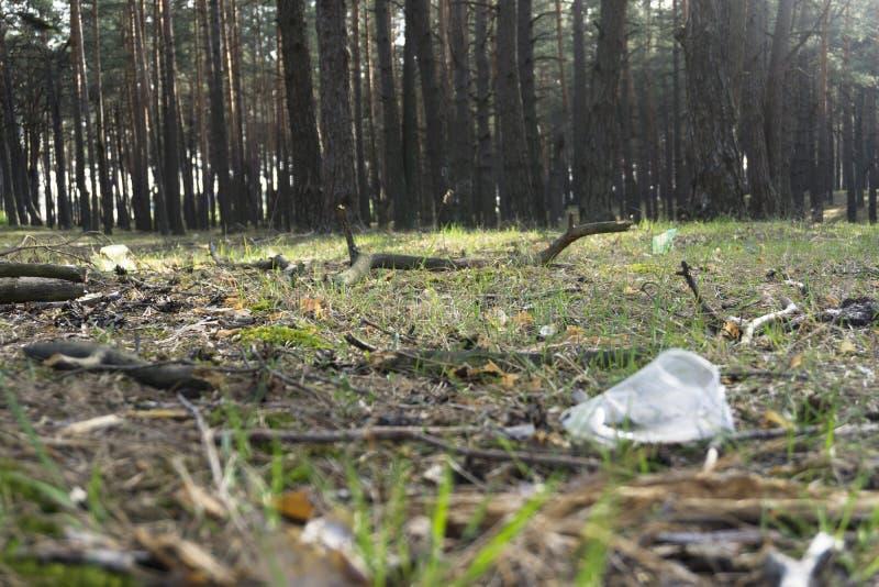 En genomskinlig plast- kopp i skogproblemet av ekologi royaltyfri foto