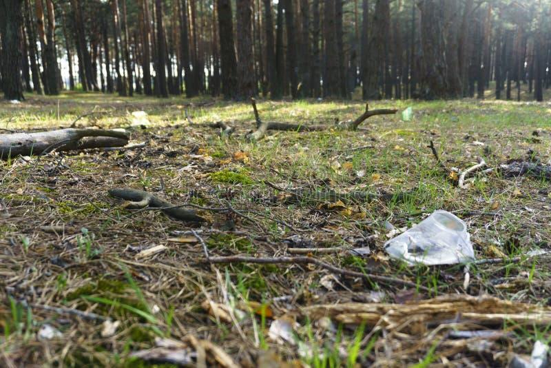 En genomskinlig plast- kopp i skogproblemet av ekologi arkivbilder