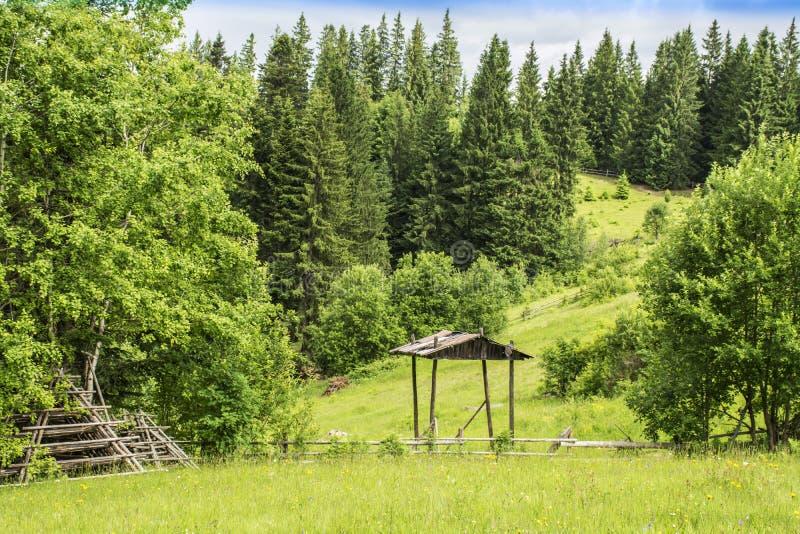 En glänta med grönt gräs och lutningarna av de Carpathian bergen som täckas med skogen royaltyfri fotografi