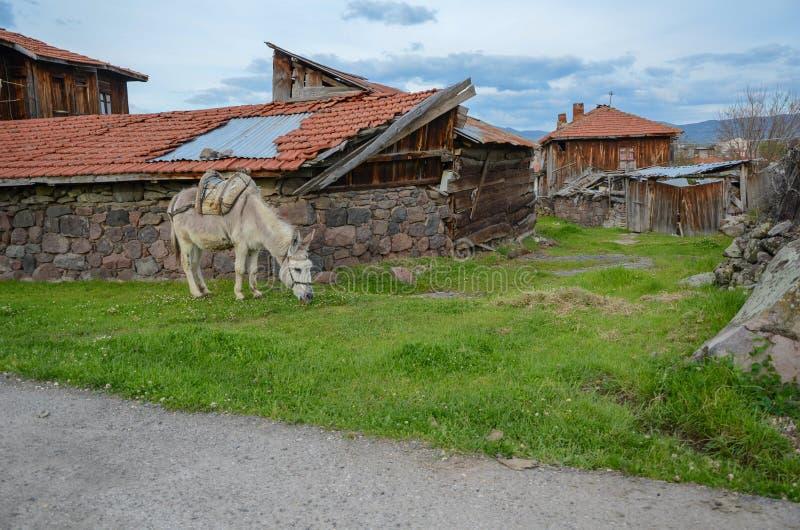 En grå åsna äter gräs nära huset royaltyfri bild