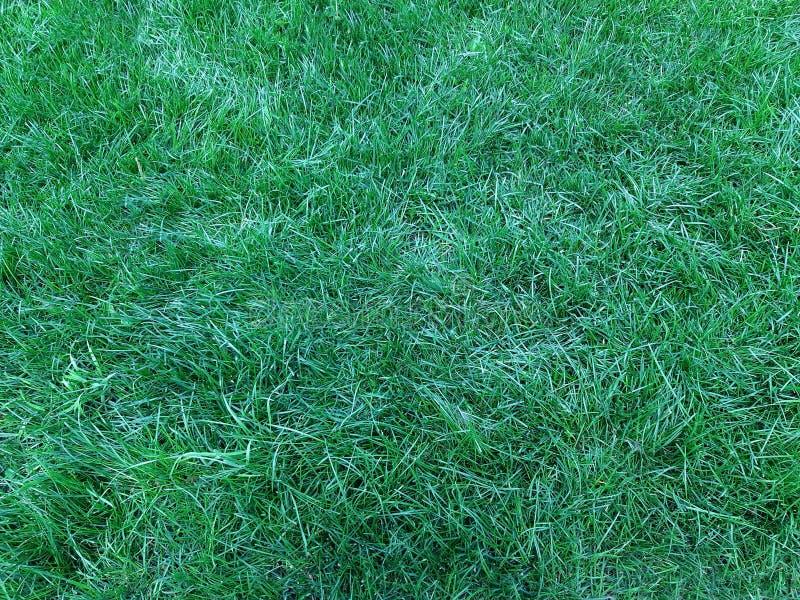 En grön gräsmatta, utmärkt naturlig bakgrund fotografering för bildbyråer