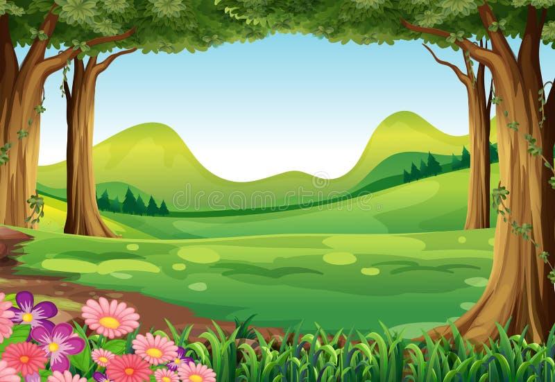 En grön skog stock illustrationer
