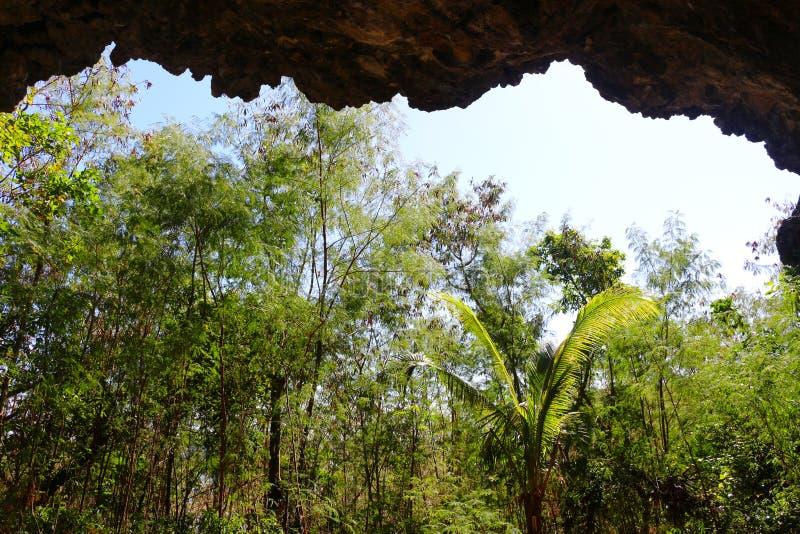 En grotta i en ö av Fiji royaltyfria foton