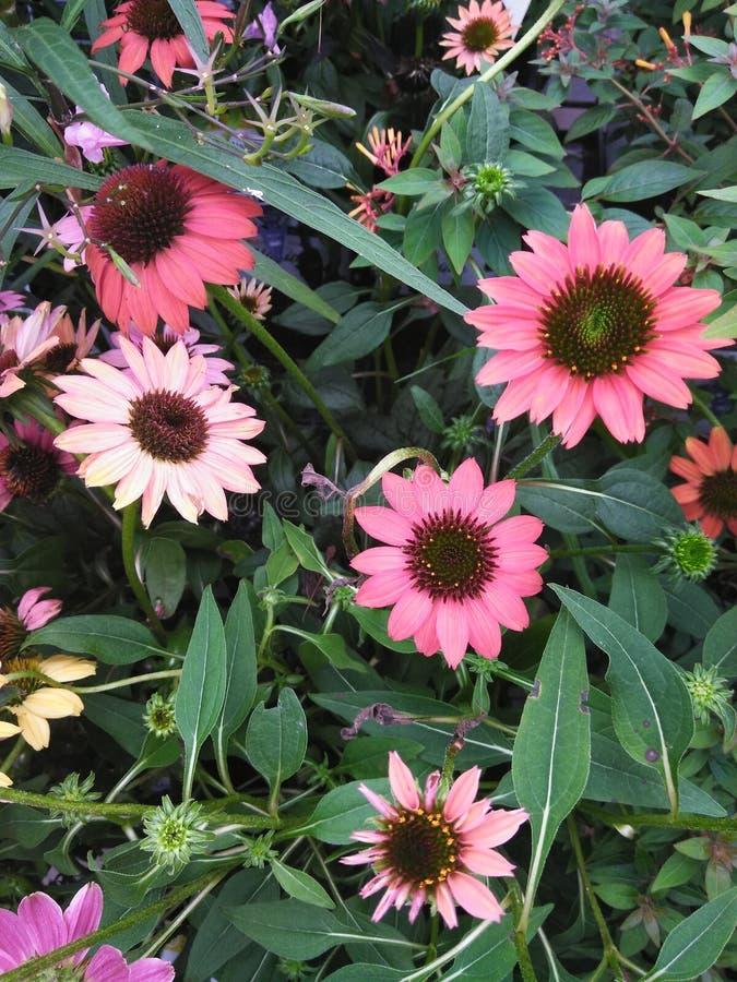 En grupp av att blomma blommor royaltyfria foton