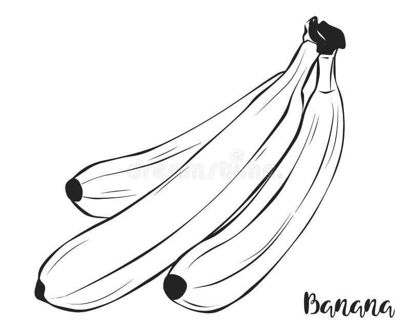 En grupp av bananer Frukt vektor stock illustrationer