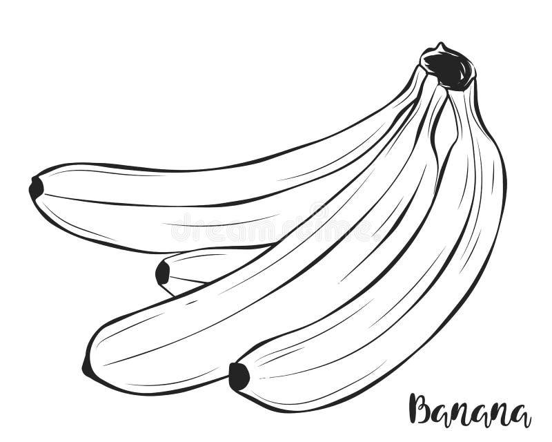 En grupp av bananer Frukt vektor vektor illustrationer
