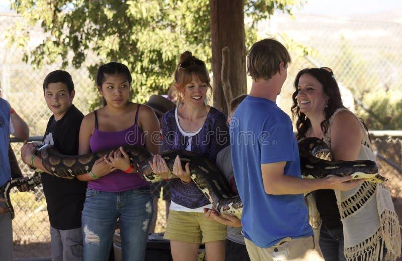 En grupp av besökare rymmer en jätte- pytonorm royaltyfri fotografi