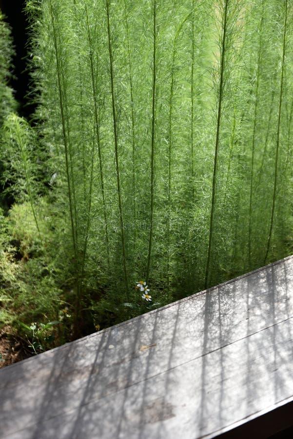 En grupp av den gröna växten gjuter ett blekt ljus över den bruna bänken royaltyfria bilder