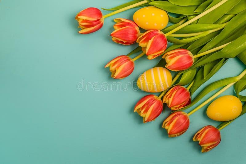 En grupp av härliga nya röda och gula tulpanblommor royaltyfri bild