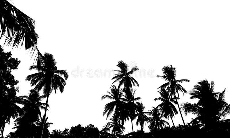En grupp av högkvalitativa konturer av den tropiska stranden gömma i handflatan cocoen arkivbild