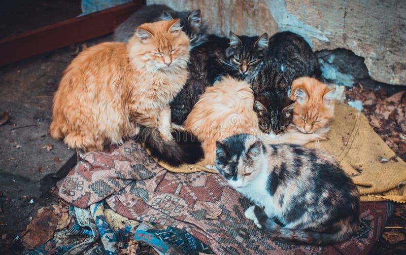 En grupp av många tillfälliga katter som utomhus ligger på den smutsiga mattan på den kalla gatan fotografering för bildbyråer