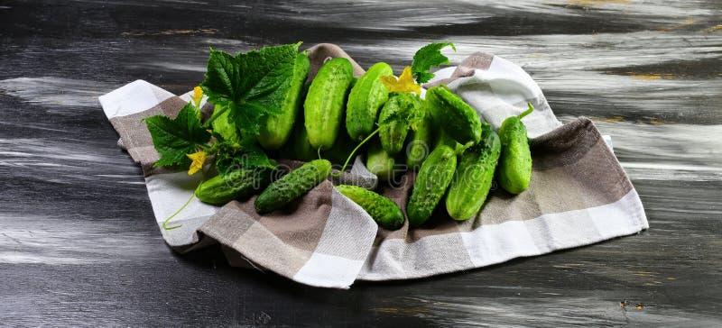 En grupp av nya gurkor på en kökshandduk Ny gurka med det gröna bladet och blomman Isolerat på mörk bakgrund Slut upp, f royaltyfri bild