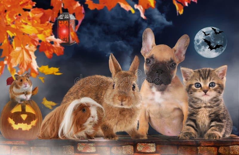 En grupp av olika husdjur på halloween royaltyfria foton