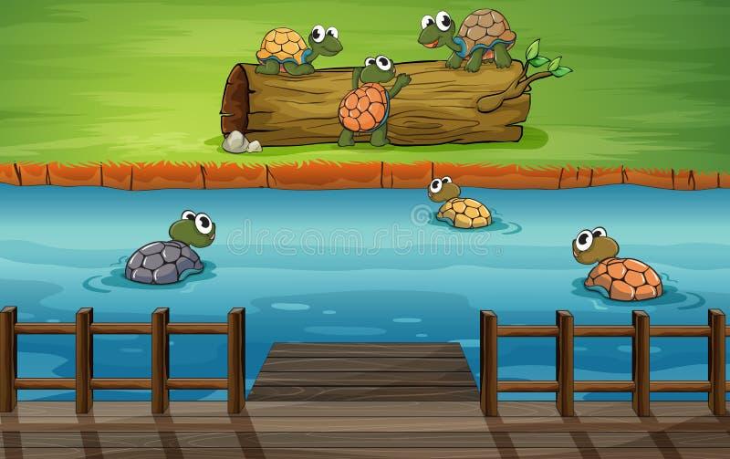 En grupp av sköldpaddor på floden vektor illustrationer