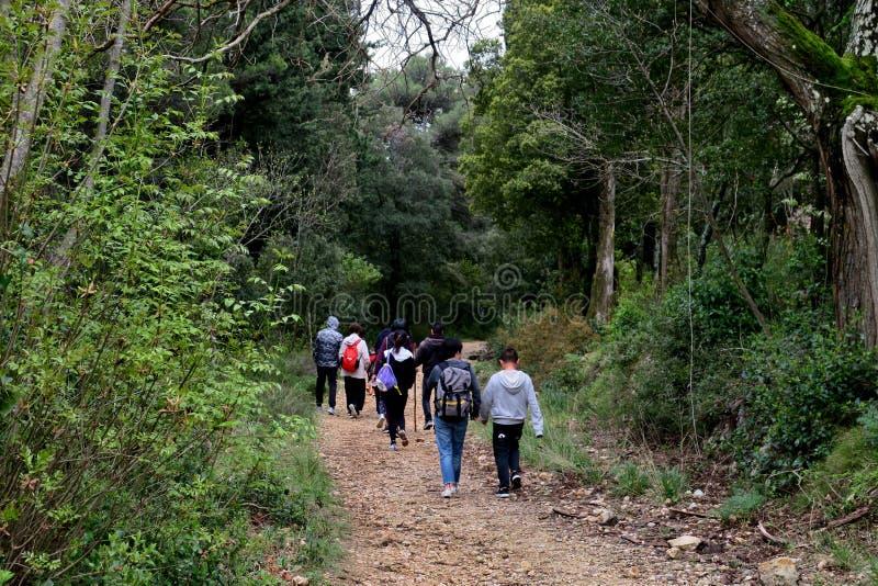 En grupp av turister i skogen promenerar smala banor royaltyfri fotografi