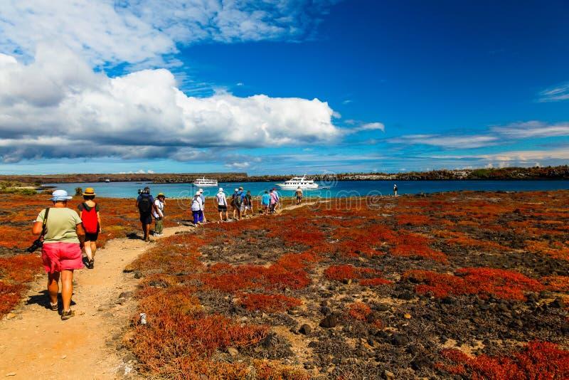 En grupp av turister som besöker Isla Plaza Sur arkivfoto