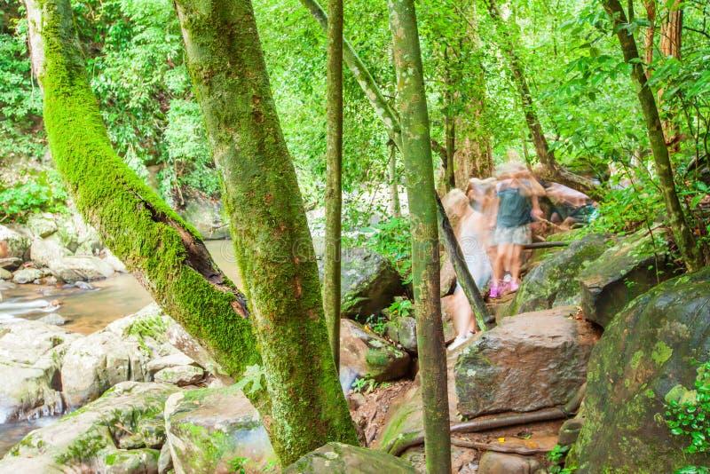 En grupp av turister som fotvandrar längs en ström i lövverk, mossa och lav för tropisk skog frodig i stammarna och, vaggar Kaeng royaltyfri fotografi