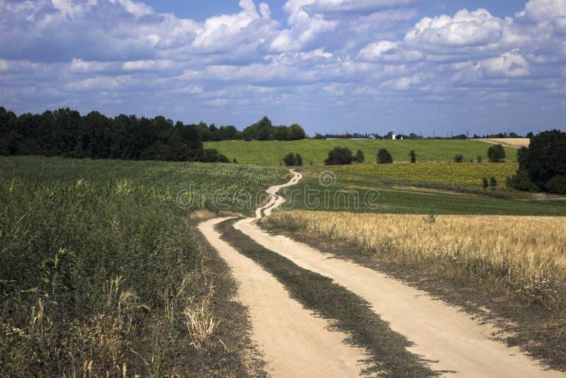 En grusväg i ett fält bland det mogna vetet, solrosorna och havren royaltyfri bild