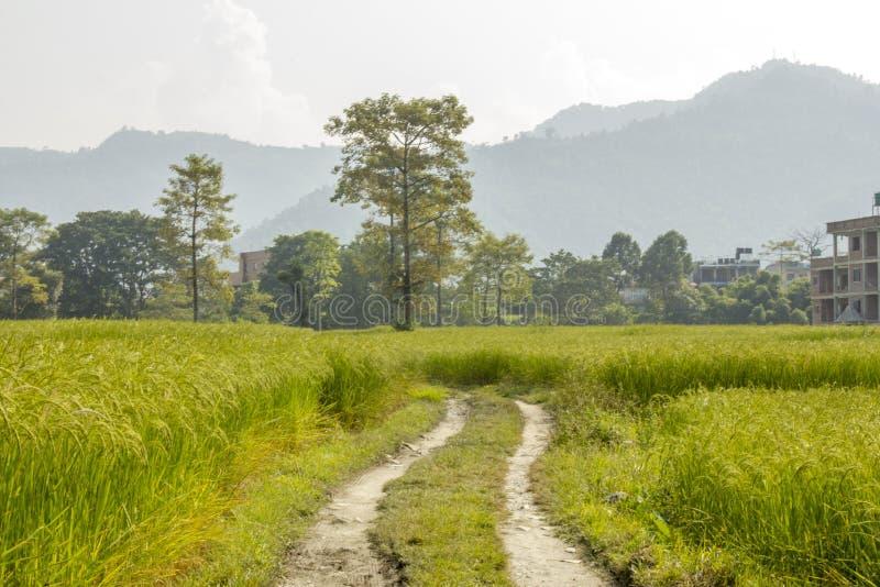 En grusväg i gröna risfält mot en bakgrund av skogen, berg och hus arkivbild