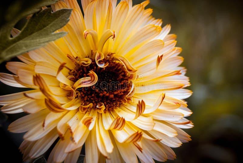 En gul blomma är nästan left_en arkivfoto