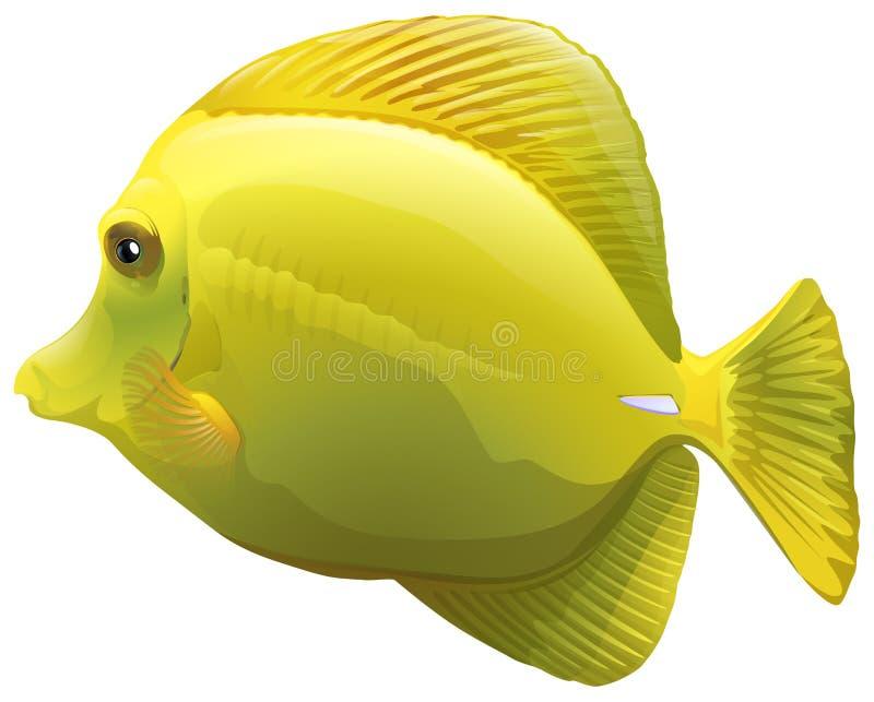 En gul fisk stock illustrationer