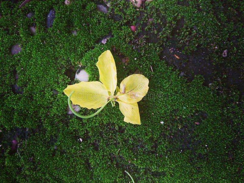 en guling på det gröna golvet arkivbild