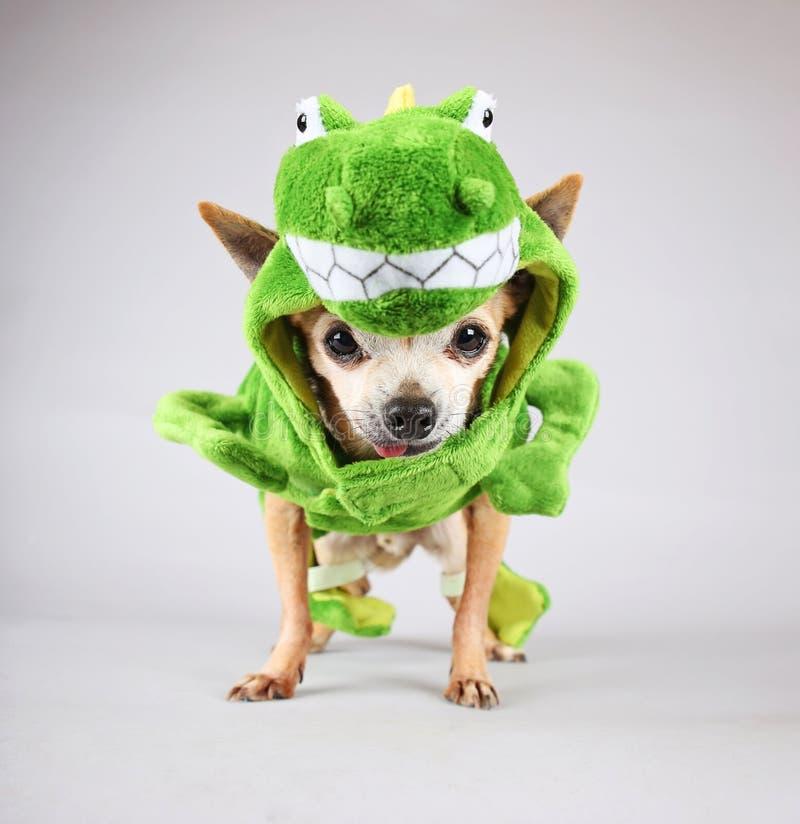En gullig chihuahuauppklädd i en grön dinosaurie eller en ödlacostu royaltyfri fotografi