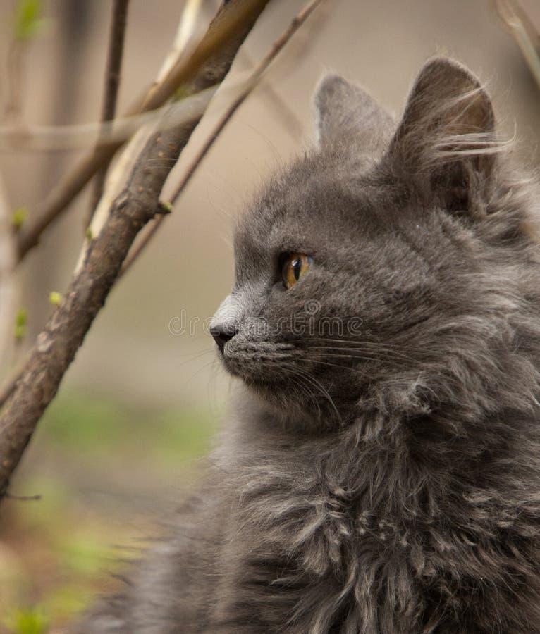 En gullig grå katt som spelar i gården royaltyfria foton