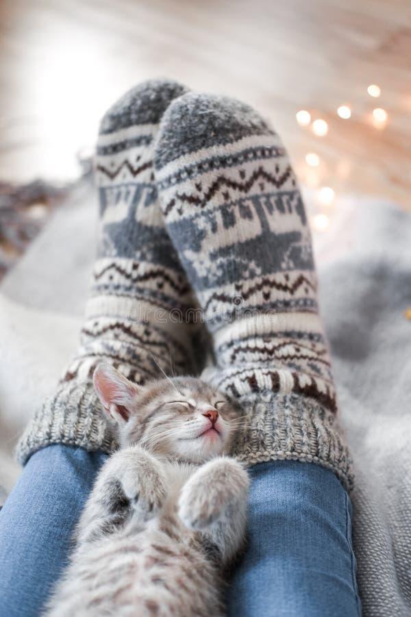 En gullig grå kattunge vilar på en pläd Julljus på bakgrunden royaltyfri foto