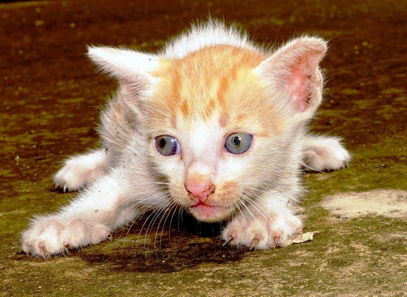 En gullig kattunge arkivbild