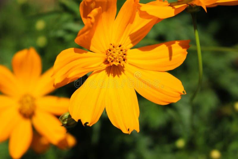 En härlig blomma royaltyfri fotografi