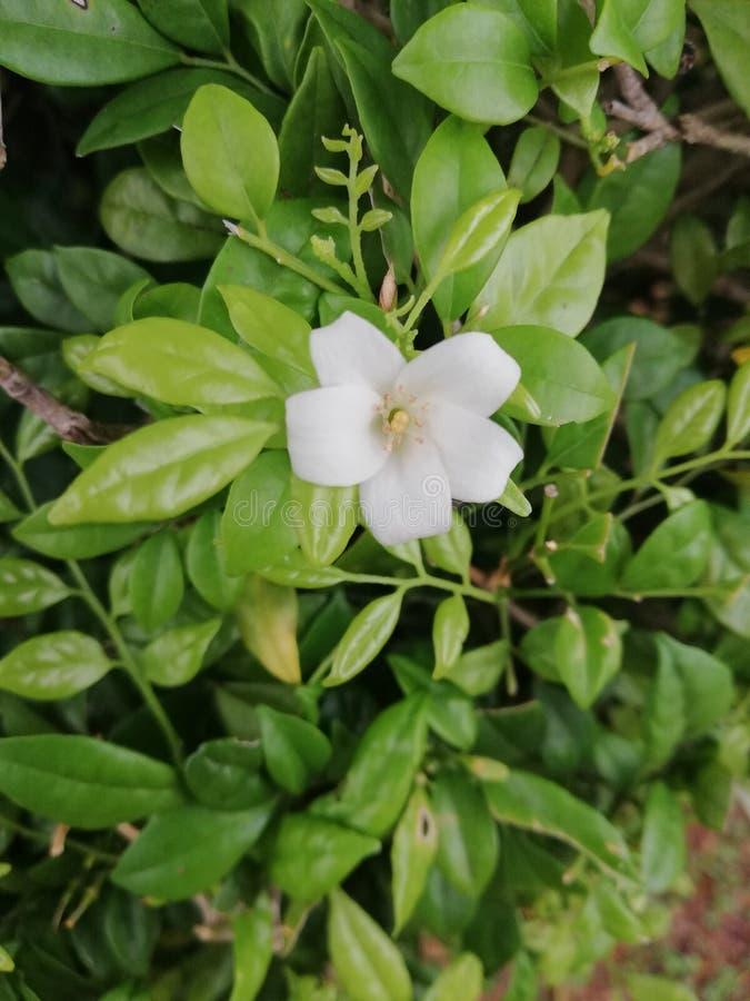 En härlig blomning arkivfoton