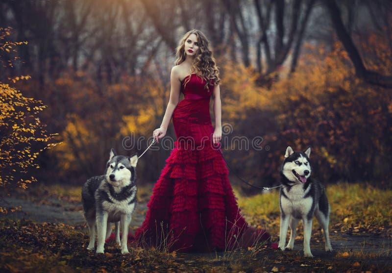 En härlig blond flicka i en chic röd klänning som går med två skrovliga hundkapplöpning i en höstskog royaltyfria bilder
