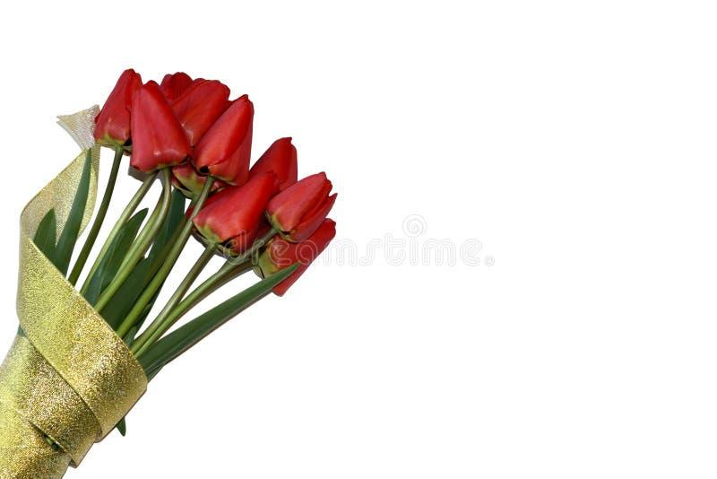 En härlig bukett av röda tulpan som slås in i guld- band på en vit bakgrund royaltyfri foto