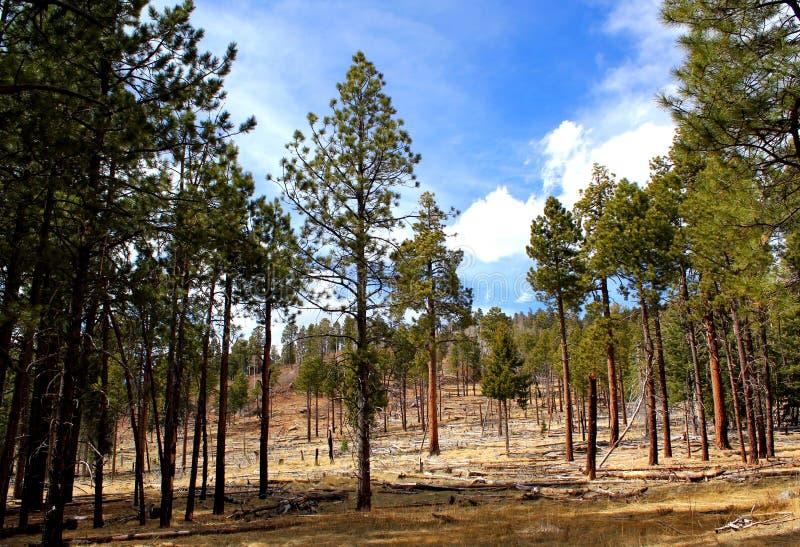 En härlig dag i skogen - USA fotografering för bildbyråer