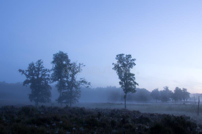 En härlig dimmig morgon fotografering för bildbyråer
