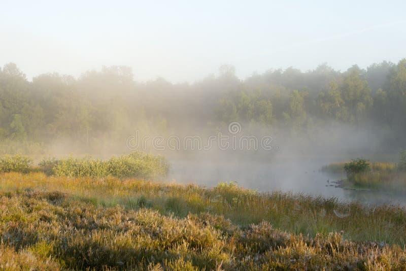 En härlig dimmig morgon royaltyfria bilder