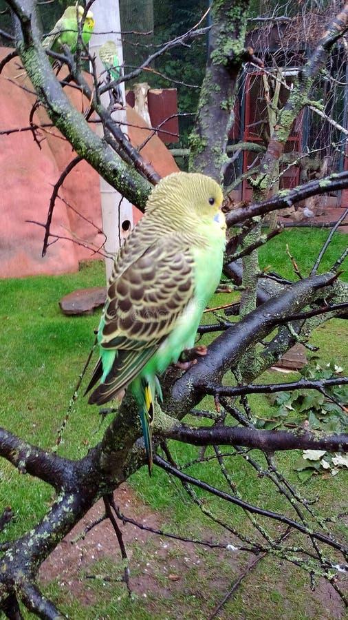 En härlig fågel royaltyfri fotografi