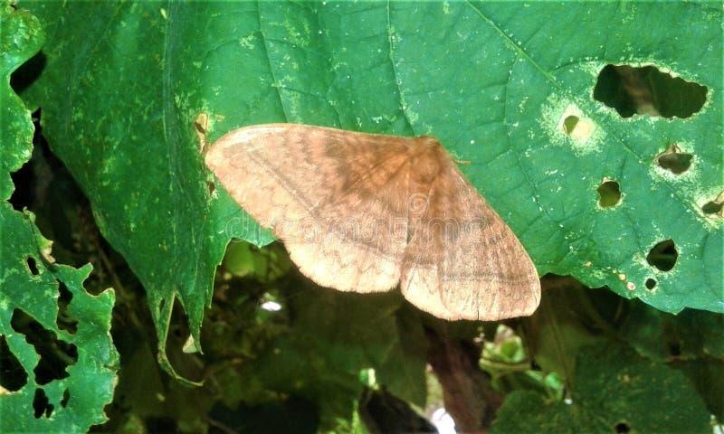 En härlig fjäril i gröna sidor arkivfoton