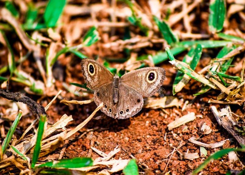 En härlig fjäril på jorden royaltyfri bild